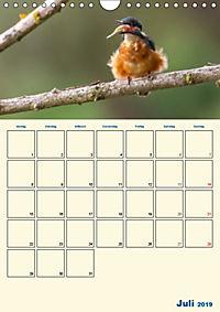 Eisvogel - einfach liebenswert, das flinke Kerlchen (Wandkalender 2019 DIN A4 hoch) - Produktdetailbild 7