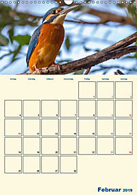 Eisvogel - einfach liebenswert, das flinke Kerlchen (Wandkalender 2019 DIN A3 hoch) - Produktdetailbild 2