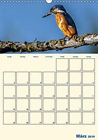 Eisvogel - einfach liebenswert, das flinke Kerlchen (Wandkalender 2019 DIN A3 hoch) - Produktdetailbild 3