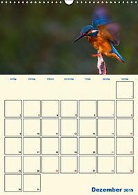 Eisvogel - einfach liebenswert, das flinke Kerlchen (Wandkalender 2019 DIN A3 hoch) - Produktdetailbild 12