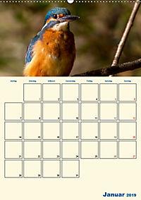 Eisvogel - einfach liebenswert, das flinke Kerlchen (Wandkalender 2019 DIN A2 hoch) - Produktdetailbild 1