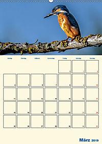 Eisvogel - einfach liebenswert, das flinke Kerlchen (Wandkalender 2019 DIN A2 hoch) - Produktdetailbild 3