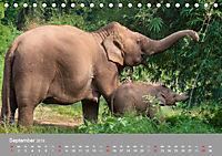 ELEFANTEN Asiens sanfte Riesen (Tischkalender 2019 DIN A5 quer) - Produktdetailbild 9
