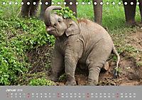 ELEFANTEN Asiens sanfte Riesen (Tischkalender 2019 DIN A5 quer) - Produktdetailbild 1