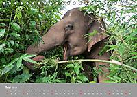 ELEFANTEN Asiens sanfte Riesen (Tischkalender 2019 DIN A5 quer) - Produktdetailbild 5
