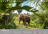 ELEFANTEN Asiens sanfte Riesen (Tischkalender 2019 DIN A5 quer) - Produktdetailbild 12