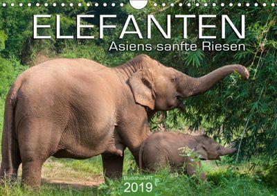 ELEFANTEN Asiens sanfte Riesen (Wandkalender 2019 DIN A4 quer), BuddhaART