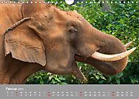 ELEFANTEN Asiens sanfte Riesen (Wandkalender 2019 DIN A4 quer) - Produktdetailbild 2