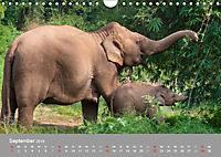 ELEFANTEN Asiens sanfte Riesen (Wandkalender 2019 DIN A4 quer) - Produktdetailbild 9