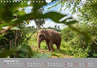 ELEFANTEN Asiens sanfte Riesen (Wandkalender 2019 DIN A4 quer) - Produktdetailbild 12