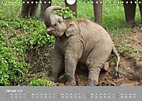 ELEFANTEN Asiens sanfte Riesen (Wandkalender 2019 DIN A4 quer) - Produktdetailbild 1