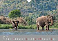 ELEFANTEN Asiens sanfte Riesen (Wandkalender 2019 DIN A4 quer) - Produktdetailbild 4