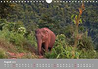 ELEFANTEN Asiens sanfte Riesen (Wandkalender 2019 DIN A4 quer) - Produktdetailbild 8