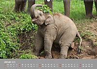 ELEFANTEN Asiens sanfte Riesen (Wandkalender 2019 DIN A2 quer) - Produktdetailbild 1