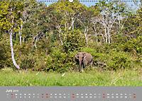 ELEFANTEN Asiens sanfte Riesen (Wandkalender 2019 DIN A2 quer) - Produktdetailbild 6