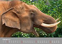 ELEFANTEN Asiens sanfte Riesen (Wandkalender 2019 DIN A2 quer) - Produktdetailbild 2