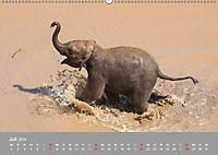 ELEFANTEN Asiens sanfte Riesen (Wandkalender 2019 DIN A2 quer) - Produktdetailbild 7