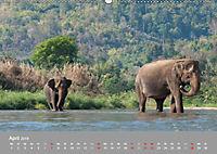 ELEFANTEN Asiens sanfte Riesen (Wandkalender 2019 DIN A2 quer) - Produktdetailbild 4