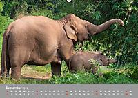 ELEFANTEN Asiens sanfte Riesen (Wandkalender 2019 DIN A2 quer) - Produktdetailbild 9