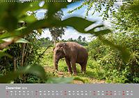 ELEFANTEN Asiens sanfte Riesen (Wandkalender 2019 DIN A2 quer) - Produktdetailbild 12