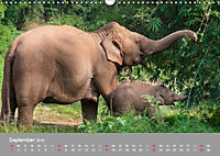 ELEFANTEN Asiens sanfte Riesen (Wandkalender 2019 DIN A3 quer) - Produktdetailbild 9