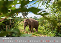 ELEFANTEN Asiens sanfte Riesen (Wandkalender 2019 DIN A3 quer) - Produktdetailbild 12