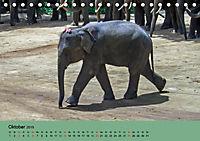 Elefanten. Badespaß am Strand (Tischkalender 2019 DIN A5 quer) - Produktdetailbild 10