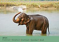 Elefanten. Badespaß am Strand (Tischkalender 2019 DIN A5 quer) - Produktdetailbild 7