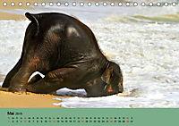 Elefanten. Badespaß am Strand (Tischkalender 2019 DIN A5 quer) - Produktdetailbild 5