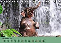 Elefanten. Badespaß am Strand (Tischkalender 2019 DIN A5 quer) - Produktdetailbild 12