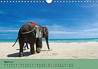 Elefanten. Badespaß am Strand (Wandkalender 2019 DIN A4 quer) - Produktdetailbild 4
