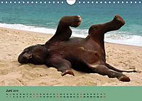 Elefanten. Badespaß am Strand (Wandkalender 2019 DIN A4 quer) - Produktdetailbild 6