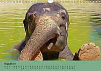 Elefanten. Badespaß am Strand (Wandkalender 2019 DIN A4 quer) - Produktdetailbild 8