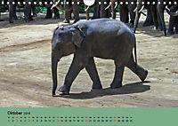 Elefanten. Badespaß am Strand (Wandkalender 2019 DIN A4 quer) - Produktdetailbild 10