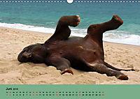 Elefanten. Badespass am Strand (Wandkalender 2019 DIN A3 quer) - Produktdetailbild 6