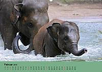 Elefanten. Badespass am Strand (Wandkalender 2019 DIN A2 quer) - Produktdetailbild 2