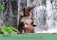 Elefanten. Badespass am Strand (Wandkalender 2019 DIN A2 quer) - Produktdetailbild 12