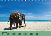 Elefanten. Badespass am Strand (Wandkalender 2019 DIN A2 quer) - Produktdetailbild 4