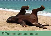 Elefanten. Badespass am Strand (Wandkalender 2019 DIN A2 quer) - Produktdetailbild 6