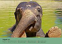 Elefanten. Badespass am Strand (Wandkalender 2019 DIN A2 quer) - Produktdetailbild 8