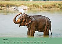 Elefanten. Badespass am Strand (Wandkalender 2019 DIN A2 quer) - Produktdetailbild 7