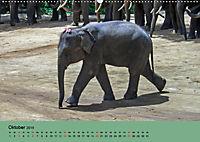 Elefanten. Badespass am Strand (Wandkalender 2019 DIN A2 quer) - Produktdetailbild 10