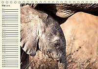 Elefanten - Graue Riesen (Tischkalender 2019 DIN A5 quer) - Produktdetailbild 5