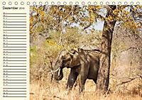 Elefanten - Graue Riesen (Tischkalender 2019 DIN A5 quer) - Produktdetailbild 12