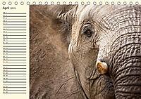 Elefanten - Graue Riesen (Tischkalender 2019 DIN A5 quer) - Produktdetailbild 4