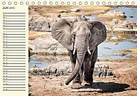 Elefanten - Graue Riesen (Tischkalender 2019 DIN A5 quer) - Produktdetailbild 6