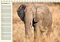 Elefanten - Graue Riesen (Tischkalender 2019 DIN A5 quer) - Produktdetailbild 11
