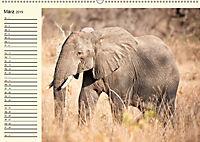Elefanten - Graue Riesen (Wandkalender 2019 DIN A2 quer) - Produktdetailbild 3