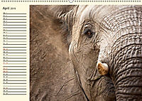Elefanten - Graue Riesen (Wandkalender 2019 DIN A2 quer) - Produktdetailbild 4