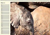 Elefanten - Graue Riesen (Wandkalender 2019 DIN A2 quer) - Produktdetailbild 5